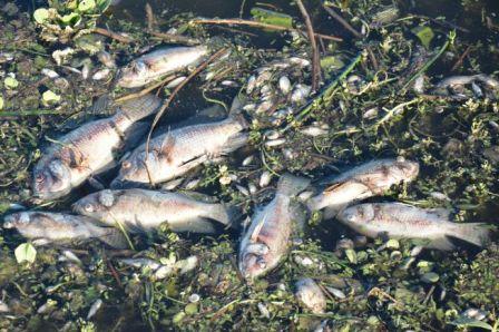 Secretaria vai investigar morte de peixes em lagoa