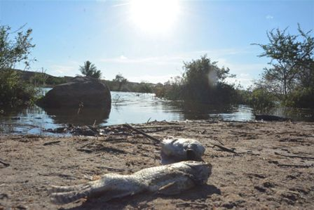 Exames indicam que baixo índice de oxigênio na água provocou morte de peixes na lagoa da Pedreira