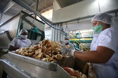 Agricultura-familiar-baiana-vai-contar-com-422-agroindustrias-ate-2022