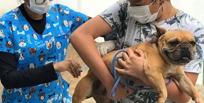Mais de 18 mil cães e gatos vacinados contra raiva em Feira de Santana