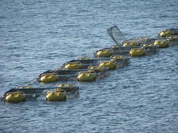 Saubara recebe investimento de R$ 120 mil em piscicultura