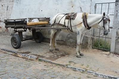 Convênio propõe troca de tração animal por motos adaptadas